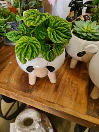 Shaun the Sheep potted plant