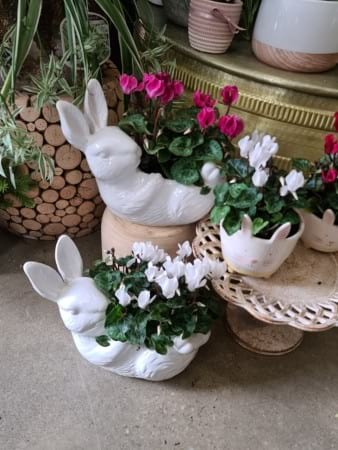 Bunny Pot Plants